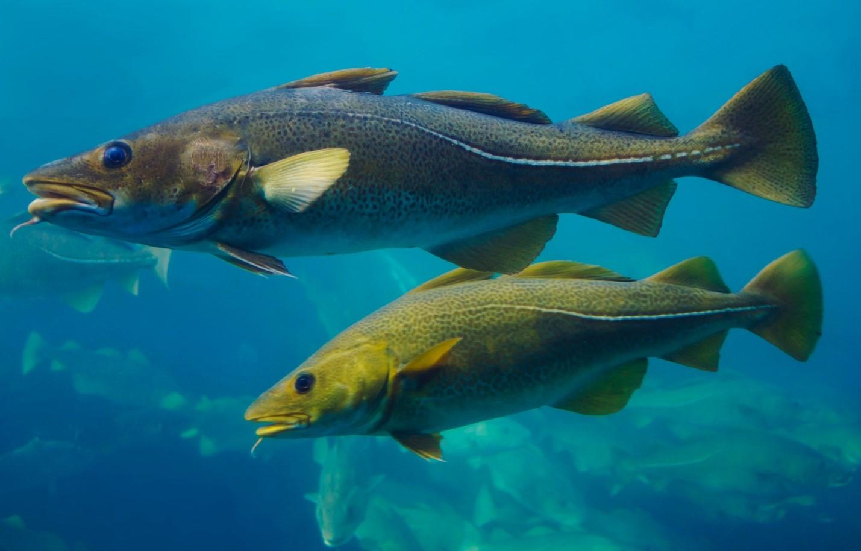 Icelandic Fish - Fishing in Iceland