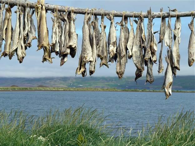icelandic dried fish - iceland fish