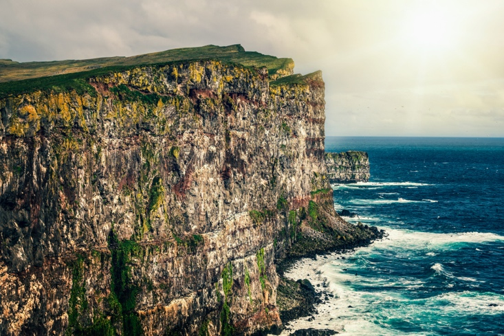 Latrabjarg - Puffin Colony in Iceland