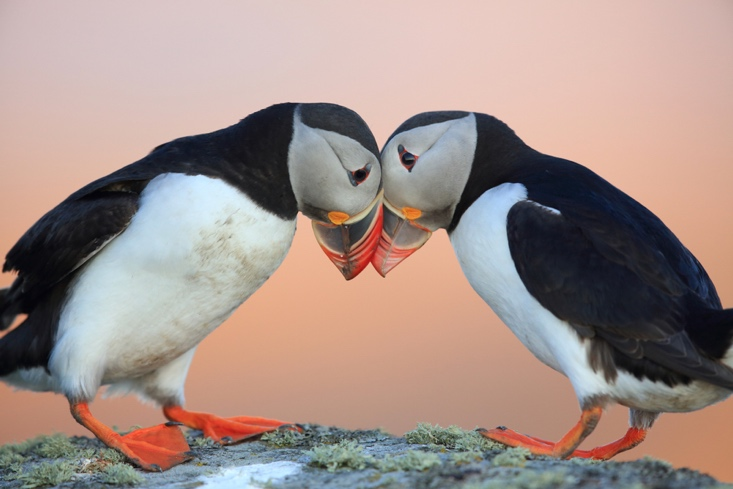 Things to do in Iceland in July - Watch Whales and Puffins